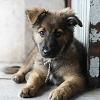 Valóban hatékony a petíciós, levélküldözgetős állatvédelem?