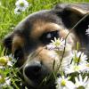 Egészséges fogak = boldog kutya