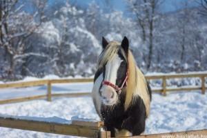 Téli lótartás - figyelj a takarmányozásra