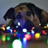 Karácsonyfa díszítés: nézd meg, hogyan csinálják a kutyák! - videó