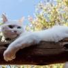 Miért szereti a macska a veszélyes, magas helyeket?