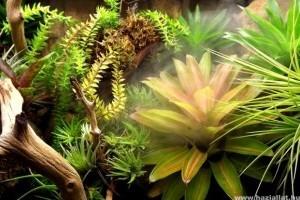 Hogyan gondozzuk a terráriumi növényeket?