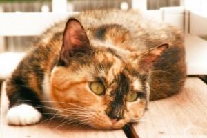 Milyen az egészséges macska?