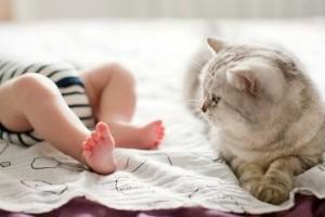 Cica vagy bébi? Macskaszőr allergia