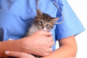 Macskák védőoltási naptára