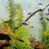 Alga-probléma az akváriumban?