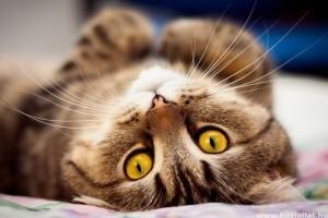 A macskák rettegett FeLV-, FIV- és FIP-fertőzése