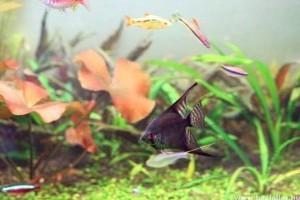 Az akváriumi higiénia tíz pontja