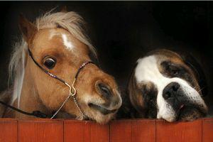 Mit eszik egymáson a kutya és a ló? - állati barátságok