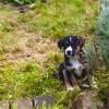 Milyen a kutyabarát kert? - Növénylista, miket ültessünk