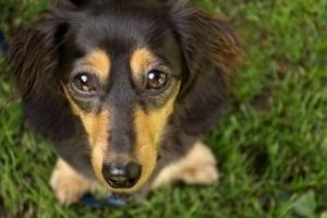 Kunyerál a kutyád? Segítünk leszoktatni!