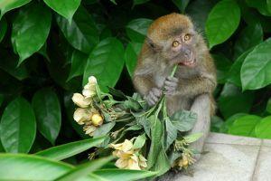 Majom az új házikedvenc? Hogyan tartsunk majmot?