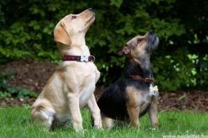 A legjobb kutyanevek, amikre a kutya biztosan hallgatni fog