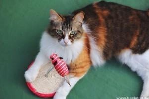 Cicás játékok: a 7 legjobb játék macskáknak és gazdáiknak