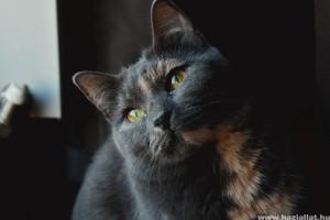 A macskára veszélyes vérszívó élősködők