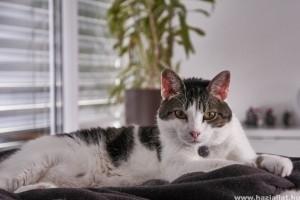 Milyen a macskabarát háztartás?