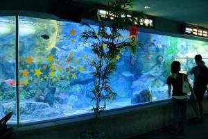 Vízcsere az akváriumban