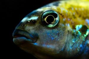 Fertőző halbetegségek