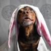 Csokinyuszi helyett kutyasüti recept húsvétra