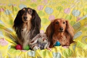 Biztonságos Húsvéti Ünnepeket minden kutyának és macskának!