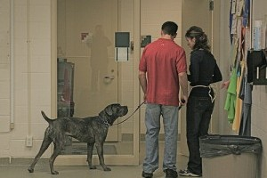 Hogyan válasszunk kutyatrénert?
