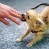 Hogyan szoktassuk le a kiskutyát arról, hogy harapdálja a kezünket?