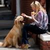 Mit tartalmaz a kutyaeledel?