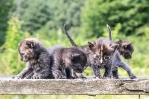 Vajon egészséges az eladó kiscica?