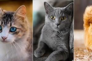 Gyakori szőrszínek cicáknál