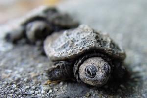 Amit a teknősökről tudni kell - vicces videó