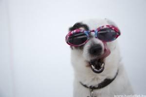 Hogyan készítsünk kutyánknak gyorsan és könnyedén jutalomfalatokat?
