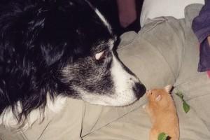 Hörcsög mellé más háziállatot? - videó