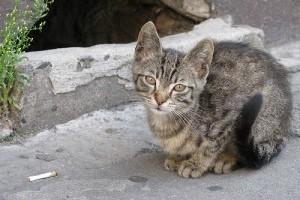 Válhat-e egy kóbor macskából házikedvenc? - 1. rész