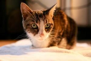 Mikor kell állatorvoshoz vinni a macskát?