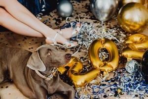 Tűzijáték-fóbia kutyáknál - Mire figyeljünk aug. 20-án?