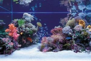 11 hiba, amit egy sósvízi akvárium tulajdonosa elkövethet - 1. rész