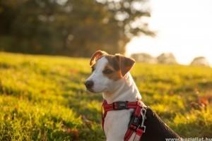 Kirándulás kutyával biztonságosan