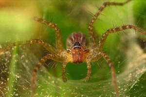 Pókok: a rovarvilág szuperhősei