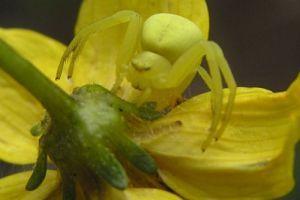 Tíz csodálatos sárga állat