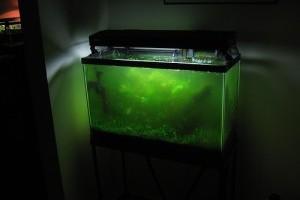 Lehet alga nélkül is üzemeltetni egy akváriumot?