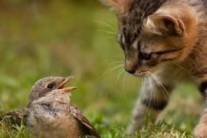 Le szeretnéd szoktatni cicádat a madárvadászatról?