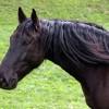 A lovak színei