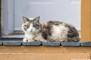 Macskafajták: a ragamuffin