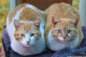 Több cica egy házban?