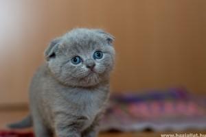 5 leggyakoribb alomtálca-probléma cicáknál