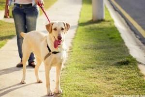 10 tuti tipp a kutyasétáltatáshoz