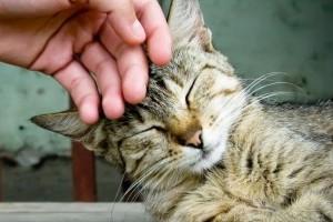 Ki is allergiás kire? Mi a macskákra vagy fordítva?