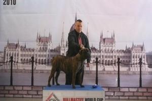 A Bull Masztiff World Cup 2010 nyertesei!