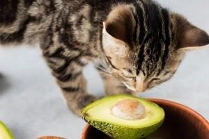 Az 5 legmérgezőbb étel a macska számára