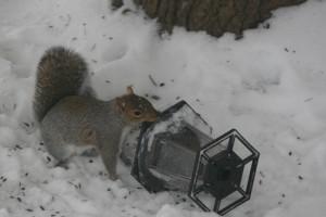 Készítsünk mókuscsapdát!